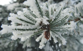 Picture winter, snow, spruce, branch, frost