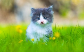 Picture grass, look, baby, kitty