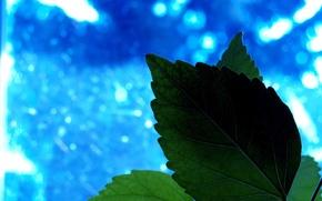 Wallpaper Plant, blue, sheet, greens