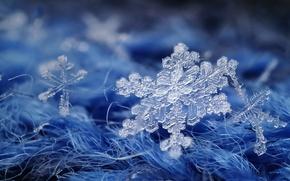 Picture macro, background, snowflake