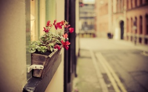 Picture flowers, the city, street