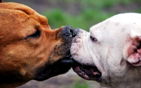 Picture PAIR, The GAME, MUZZLE, KISS), RING, NOSES
