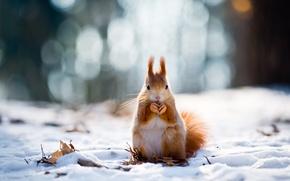 Picture winter, snow, protein, bokeh