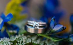 Wallpaper flowers, stone, ring, wedding, blue petals