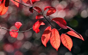 Picture macro, branch, foliage, glare, red, autumn