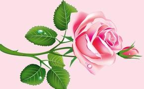 Picture leaves, drops, rose, vector, petals, Bud, postcard