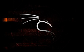Picture white, background, black, dragon, new year, 2012, coming, BackTrack Linux