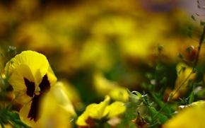 Picture macro, yellow, Flowers