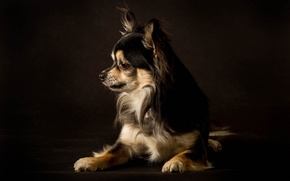 Picture dog, dog, the dark background