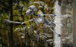 Picture skeleton, glass, fragments, skull