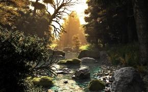 Wallpaper forest, trees, sunset, nature, river, stream, stones, art, river