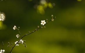 Picture Spring, Flower, Sprig