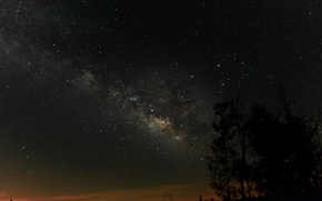 Picture stars, trees, night, the milky way