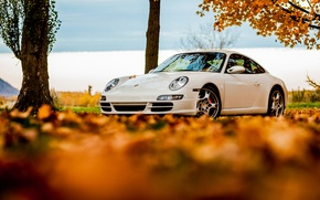 Wallpaper foliage, white, tree, white, leaves, autumn, Porsche, Porsche, 911, the sky, sky, autumn