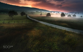 Wallpaper road, trees, nature, fog, field, the evening, morning