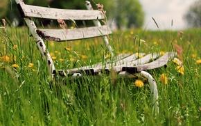 Picture greens, grass, flowers, bench, background, widescreen, Wallpaper, vegetation, mood, shop, shop, wallpaper, flowers, bench, widescreen, …