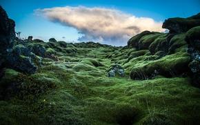 Picture hills, moss, green, Ireland, photo, photographer, Andrés Nieto Porras, rastenie