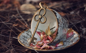 Picture leaves, key, Cup