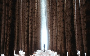 Picture forest, trees, people, silhouette, alley