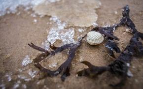 Picture sea, beach, macro, shell