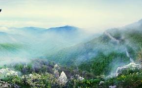 Wallpaper the sky, mountains, fog, photo, bird, Forest