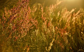 Picture summer, grass, light, glare