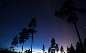 Picture space, stars, trees, night, space