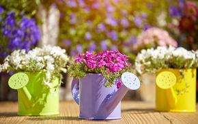 Picture flowers, lake, flowering