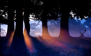 Picture rays, trees, nature, deer, nature