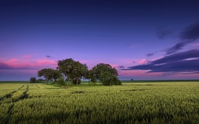 Picture field, nature, the evening