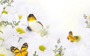 Wallpaper butterfly, flowers, buds, flowers, leaves, leaves, twigs, butterflies, buds, white chrysanthemums, twigs, white chrysanthemums