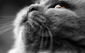Picture cat, cat, plush