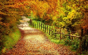 Picture path, the fence, Autumn, trees, forest, leaves