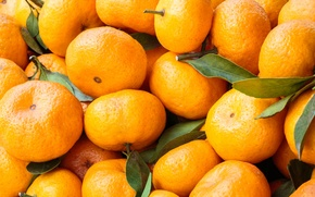 Picture leaves, fruit, tangerines