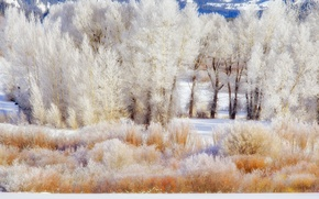 Picture winter, frost, snow, trees, mountains, USA, the bushes, Wyoming, grand teton national park