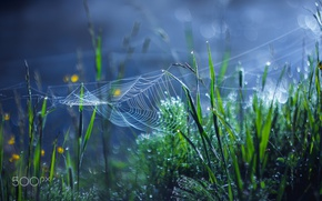 Picture web, bokeh, grass, macro, Rosa