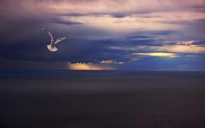 Picture sea, clouds, rain, bird, Seagull