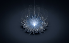 Picture flower, light, line, grey background