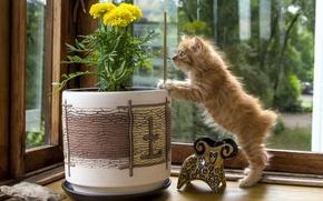 Picture flower, figurine, kitty, curiosity, pot, Kurilian Bobtail