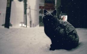 Picture winter, road, car, cat, snow, machine, city, the city, black, street, black, road, cat, winter, …