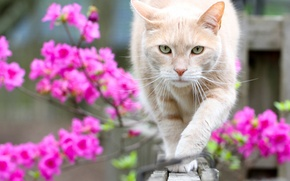 Picture cat, look, flowers, bokeh