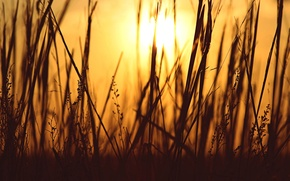 Picture grass, the sun, macro, background, Wallpaper, plant, the evening, silhouette, wallpaper, widescreen, background, full screen, …