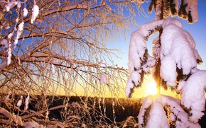 Picture frost, forest, the sun, snow