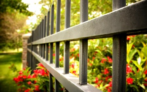 Picture macro, flowers, red, background, widescreen, Wallpaper, the fence, fence, gate, the fence, wallpaper, flowers, flower, …