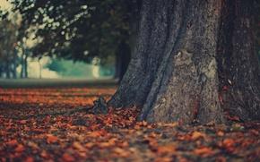 Wallpaper tree, nature, autumn, Wallpaper, leaves