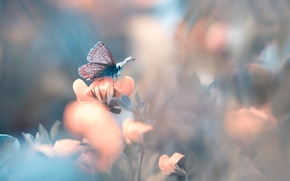 Picture flower, butterfly, bokeh