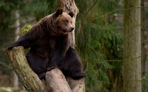 Picture tree, Bear, leisure