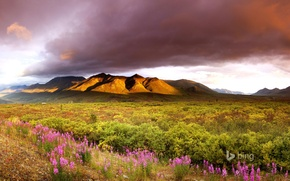 Picture the sky, clouds, flowers, mountains, valley, Canada, Yukon