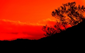 Picture the sky, clouds, mountains, tree, silhouette, glow