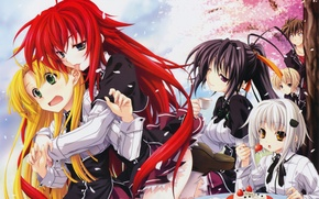 Picture language, girls, anime, petals, Sakura, strawberry, art, cake, form, guy, students, miyama zero, always koneko, …